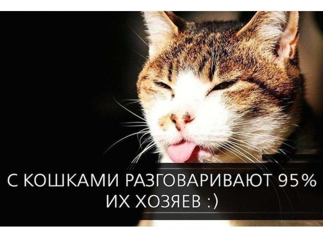 я говорю по кошачьи картинка нужно