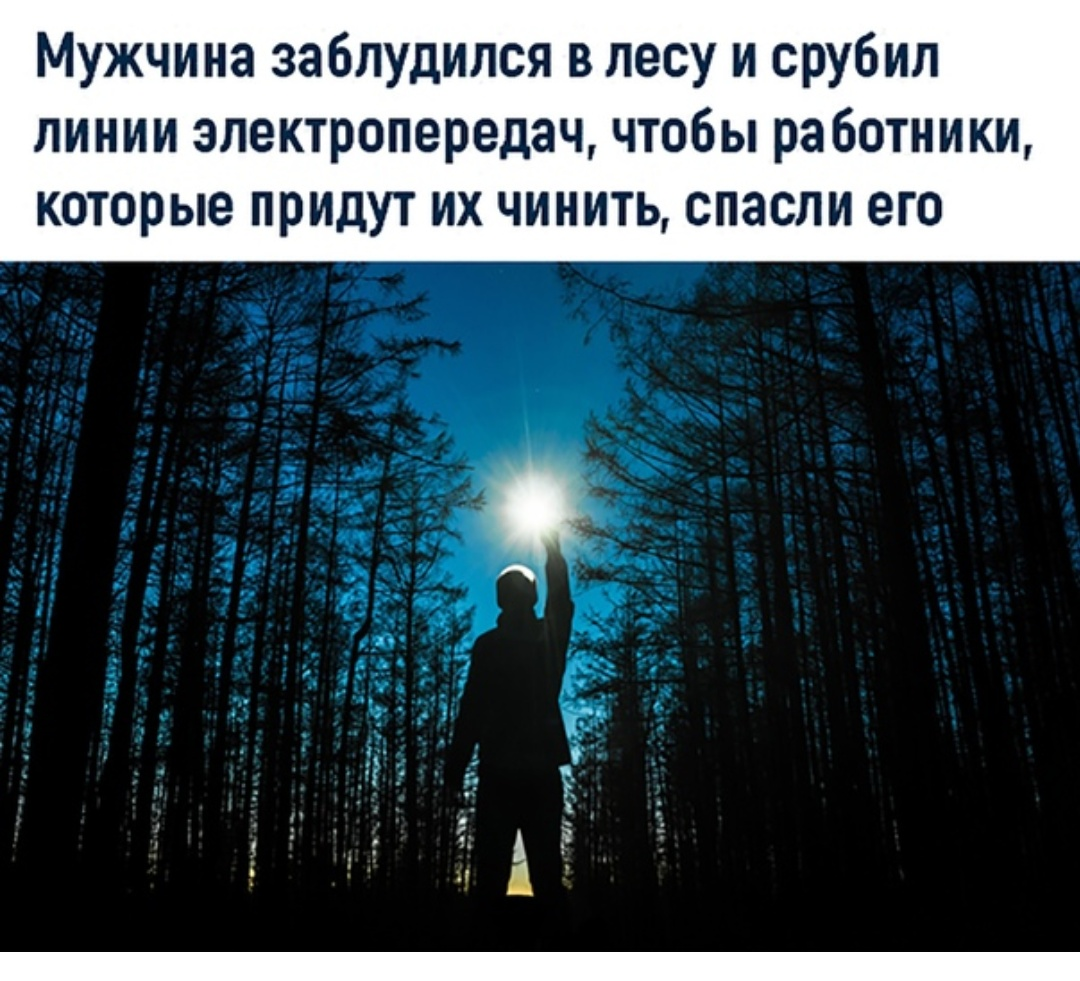 Смешные, потерялся в лесу смешные картинки