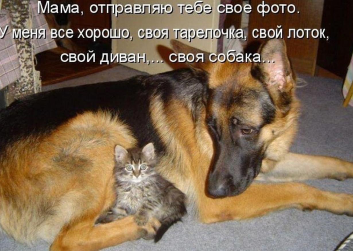 Днем, прикольные картинки с собачками и надписями