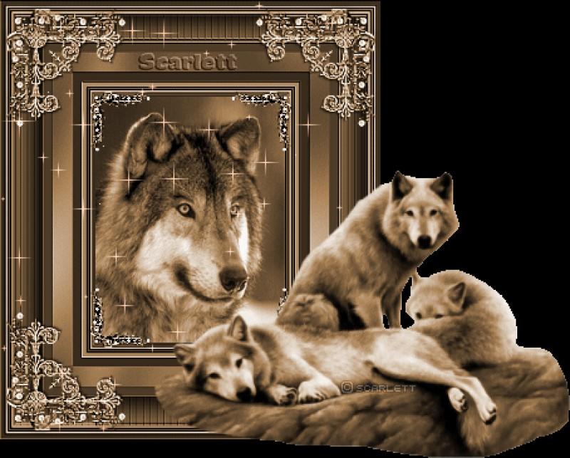 гифы волки снатпнсью отличие
